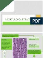 Músculo Liso y Cardiaco