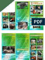TRIPTICO DE ANIMALES EN PELIGRO DE EXTINCION