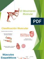 Movimiento Muscular