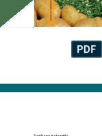 Batatas hol