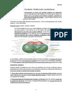 [Ebony]-T4. Cerebro. División de su estudio. Morfología general del cerebro. Definición de sus accidentes