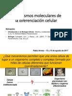 Clase 1- Mecanismos Celulares de La Diferenciacion Celular