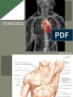 M2 sem II curs 6-7 Torace.pdf