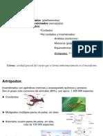Artropodos 2013 (2)