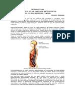 Apuntes Neuroanatomía