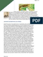conoce_mas_de_don_bosco.pdf
