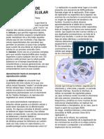 Articulo Procesos de Reproduccion Celular