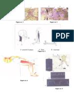 2008 Biologie Etapa Nationala Clasa a Xi-A Desene Practic