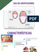 Diferencias de Denticiones