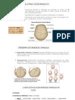 Deformidades Craneales PDF