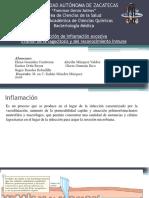 Actividad de Bacteriología MEDICA