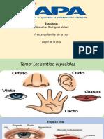 Diapositiva Los Sentidos
