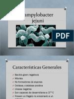 compilobacter yeyoni