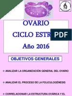 Ovario y ciclo estral