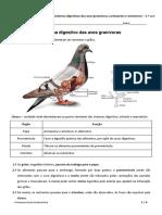 Relação entre o Sistema Digestivo das Aves Granívoras - Ruminantes - Omnívoros - Resumo