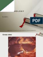 Liver Pathology Class 1 2010