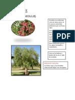 Flora y Fauna Locumba