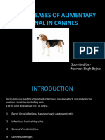 Viral Diseases of Alimentary Canal in Canines