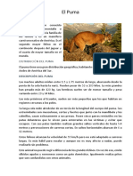 El-Puma