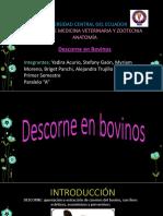 Descorne en Bovinos