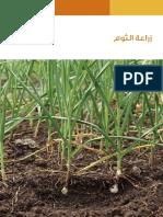 زراعة الثوم في فلسطين