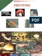 Reino fungi  Exercicios