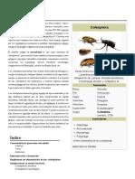 Escarabajos, tipologia y anatomia.