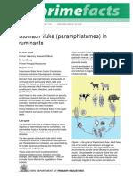 Prime Fact 452 Stomach Fluke Paramphistomes in Ruminants