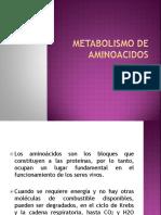 Tema 7 - Metabolismo de Aminoacidos