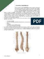 COLONNA VERTEBRALE.pdf