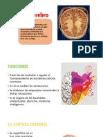 El Cerebrodiapos Dechacon 3 Semana