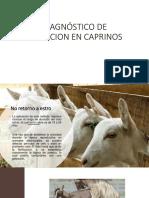 diagnostico de gestación ovinos