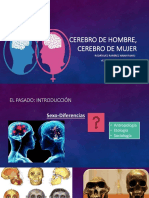 Cerebro de Hombre Cerebro de Mujer
