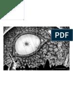 5 Remina-El planeta lamedor.pdf