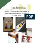 U3b_PruebasBioquimicas_17458.PDF