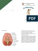 Díptico Sistema Nervioso