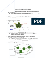 chloroplast structure and pigments notes