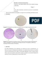 Informe Macrofagos 9 FINAL