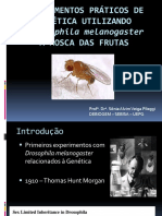 Experimentos Com Drosophila Melanogaster 2018