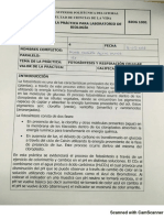 practica4-fotosintesis