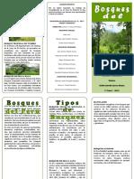 386226246-Triptico-Bosques-Del-Peru.docx