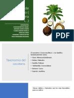 El Cultivo de Cocotero ( Cocos Nucífera L