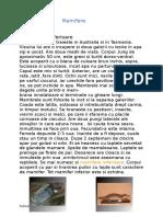 referat.clopotel.ro-Mamifere.doc