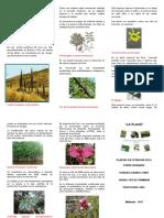 PLANTAS EN EXTINCION EN EL PERÚ.docx