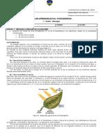Guía N°2 - Fotosintesis - I° medio .doc