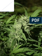 (CHM3650) Analysis and Extraction of CBD from Cannabis via RP-HPLC-MS/DAD, Creating Synthetic Medicinal Marijuana, and Medical Applications for Epilepsy
