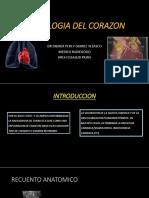 RADIOLOGIA DEL CORAZON.pptx