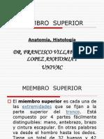 anatomia general miembro superior