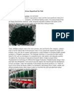 Microalgae- A Natural Green Superfood for Fish