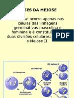 Biologia PPT - Meiose II